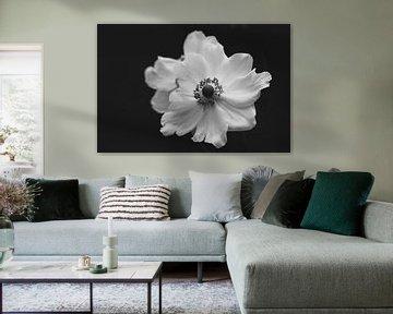 Weiße Anemone von Tania Perneel