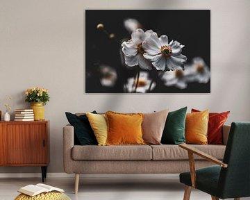 Weiße Herbstanemonen von Tania Perneel
