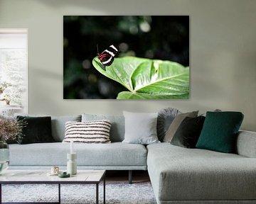 Schmetterling von Nadine Rall