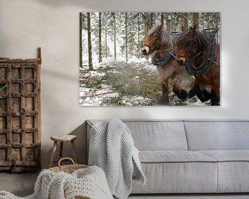Werkpaarden in de sneeuw 5912004122 fotograaf Fred Roest