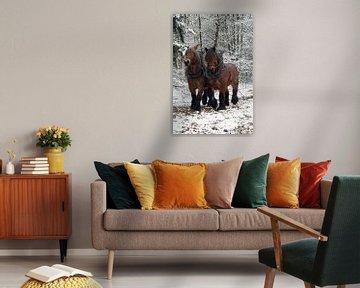 Werkpaarden in de sneeuw 5912003061 fotograaf Fred Roest