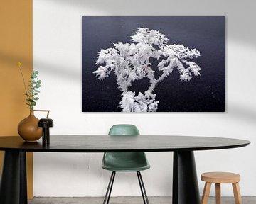 Bevroren planten met rijp van Trinet Uzun