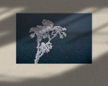 Detail einer Pflanze mit reifem Wasser von Trinet Uzun
