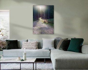 entering the swedish woods sur Sagolik Photography