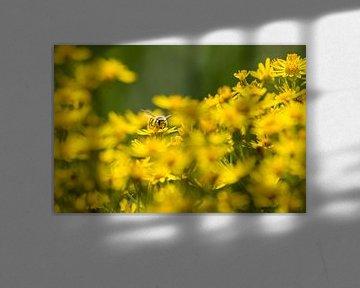 Blumen mit Biene von Menno Selles