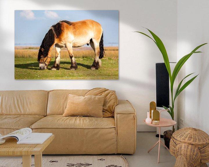 Beispiel: Pferd auf Juist von Dirk Rüter