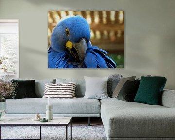 Blauwe Ara van Chloë Luyckx