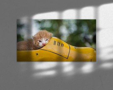 Kitten in klomp van Jan Jongejan