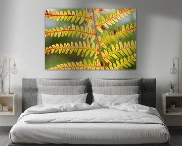 Herfstkleuren in een varenblad van Ron Poot