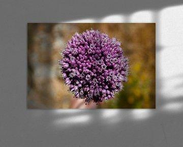 Wildflower van Angelika Stern