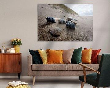 Schelpen bij Noordvoort (Langevelderslag) van Jan van de Laar