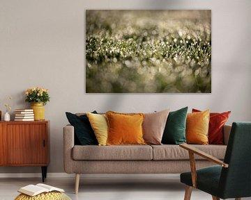Tau auf dem Rasen an einem frühen Septembermorgen mit einem schönen Bokeh von KB Design & Photography (Karen Brouwer)