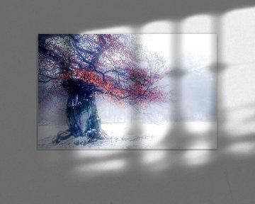 De winter kleuren van Joris Pannemans - Loris Photography