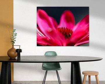 Echinacea von Marieke Funke