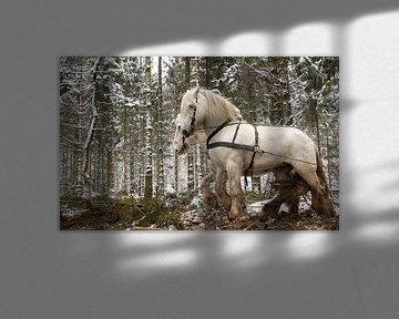 Werkpaarden in de sneeuw 5912004250 fotograaf Fred Roest
