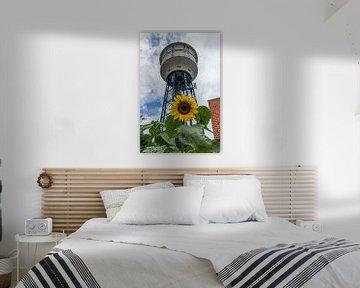 Zonnebloem en de watertoren in Goes