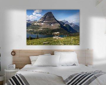 Bergziege im Glacier N.P. von Antwan Janssen
