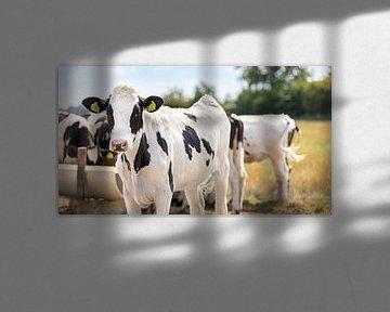Close-up koe bij de drinkbak van Percy's fotografie