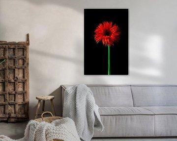Blume von Yvonne Stroomberg