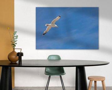 Vliegende meeuw van Percy's fotografie