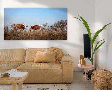 Bruine koeien grazend in de Manteling van Percy's fotografie