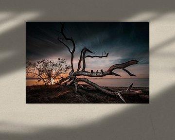 Slapende bomen van Sebastian Witt
