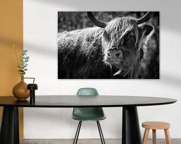 Schotse hooglander in zwart-wit van Kris Christiaens