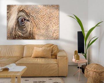 eine Nahaufnahme eines alten Elefantenauges. von Marcel Derweduwen