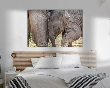 Jong olifant onder de poten van moeder olifant van Marcel Derweduwen