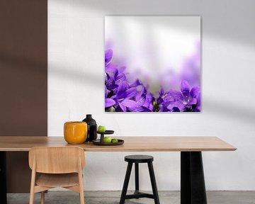Violette Campanula-Blüten von Diana van Tankeren