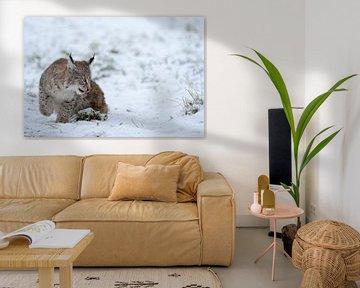 Eurasischer Luchs (Lynx lynx), Jungtier spielt im Schnee, früh übt sich, lustiges Bild, Europa. von wunderbare Erde