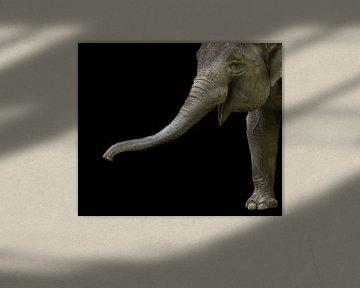 Elefant von Hennie Zeij