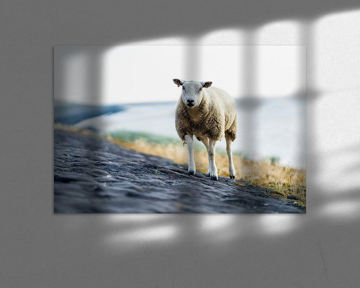 Sfeerimpressie: Een schaap op het strand bij de Waddenzee van Steven Dijkshoorn