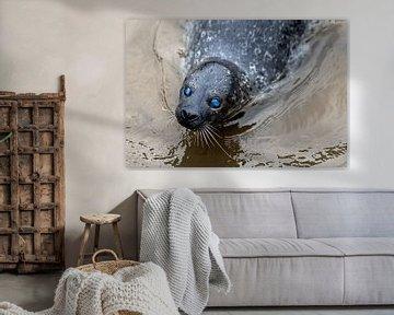 Zeehond blauwe ogen