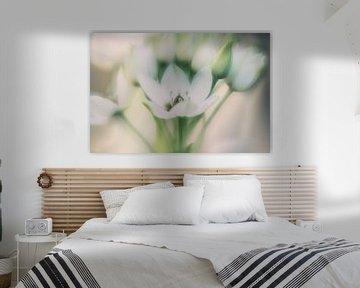 Weiße Blumen von Hennie Zeij