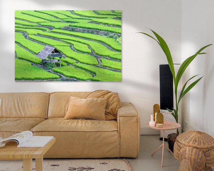 Sfeerimpressie: Groene rijstterrassen van Henny Hagenaars