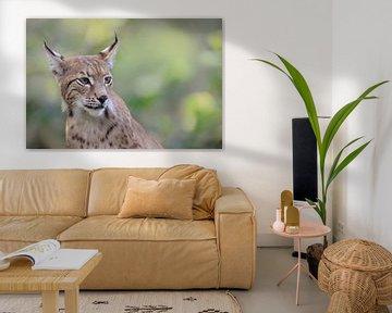 Euraziatische lynx ( Lynx lynx ), fijn gedetailleerd portret, nadruk op ogen en penseeloren, zachte  van wunderbare Erde