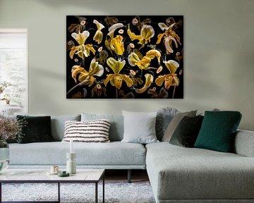 Banana orchidea sur Olaf Bruhn