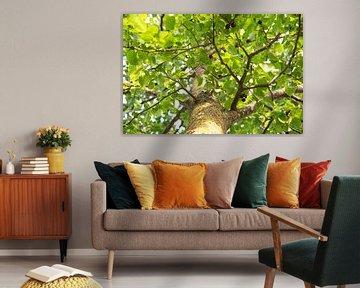 Baum von Mirjam Verbeek