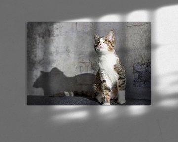 Neugierige Katze von Joost Winkens