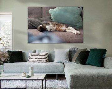 Schlafende Katze von Joost Winkens
