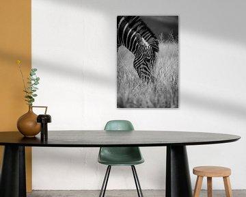Zebra zwart wit van Dave Oudshoorn