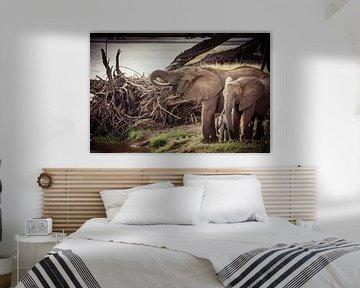 Drinkende olifanten bij rivier in kleur van Dave Oudshoorn