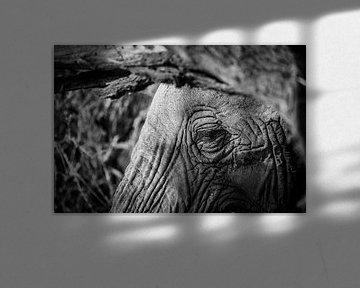 Das Auge eines Elefanten in Schwarz-Weiß von Dave Oudshoorn