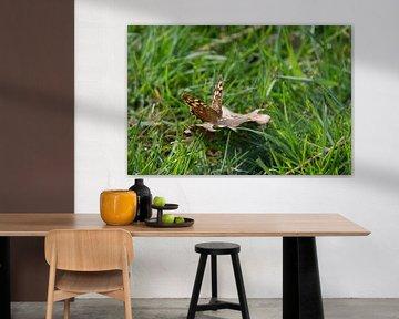Schmetterling von Joost Winkens
