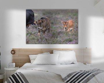Spaanse koe kalfjes (Sayaguesa runderen) van Eric Wander