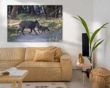 Overstekend grof wild op natuurterrein Planken Wambuis Ede van Eric Wander
