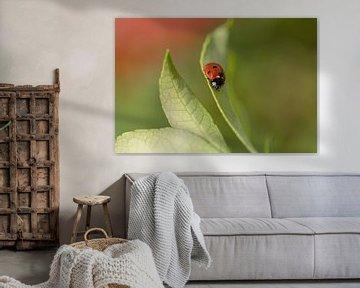 Lieveheersbeestje (Coccinellidae) van Eric Wander