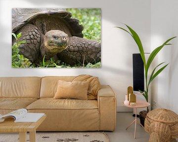 Galapagos Schildkröte von Angelika Stern