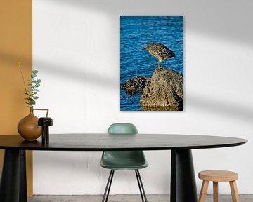 Jonge kwak op rots von Brenda Gonzalez